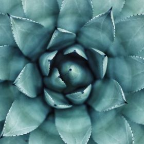 top of a succulant
