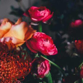 reddish flowers