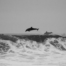 Dolphins above the waves