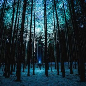A forest in the dark