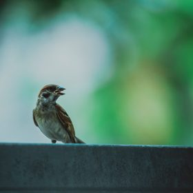 bird on a ledge
