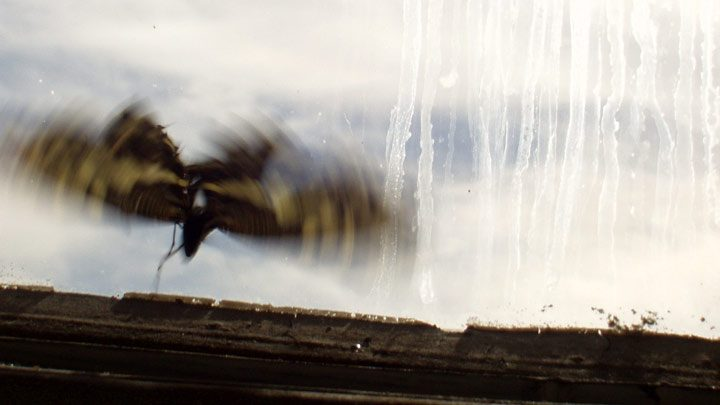 butterfly behind streaked window