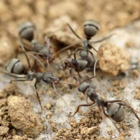 ants and clumpy sand