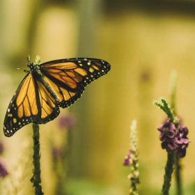 """A butterfly resting on a stem - imagery for """"If the Fluttering of Butterfly Wings"""" by Cathy Ulrich"""
