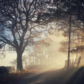 """Sunlight streaming down a path between trees - imagery for """"Unearthly"""" by David Mohan"""
