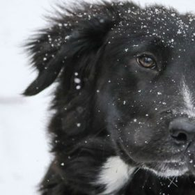 """A dog speckled in snow - imagery for """"When the Dog Gets Ready to Die"""" by Randal Eldon Greene"""