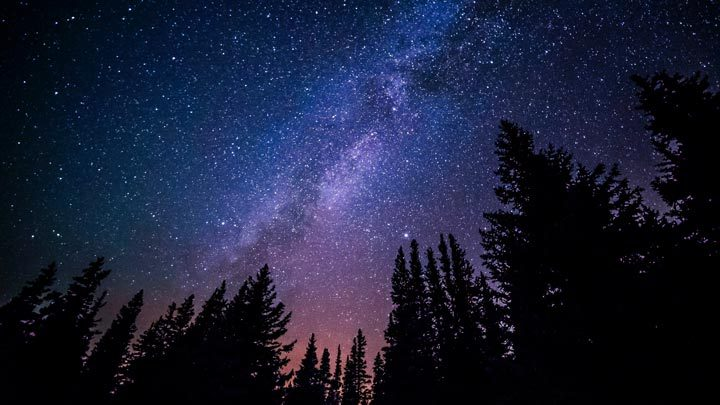 """starry sky over forest - imagery for """"Star Fall Sans Sound"""" by Jess Mize"""