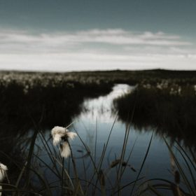 Marshy area, image for Breath in the Marsh by Joseph Dante