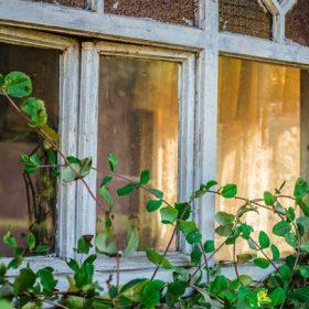 A vine growing on window, image for Hard Like That by Monica Flegg