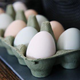 a dozen eggs in a carton - image for Aversion by Sheldon Lee Compton
