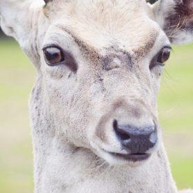 """deer image for """"Deer Crossing"""" by Kristinha M. Anding"""