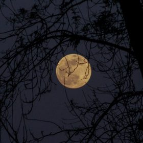 "moon image for ""Wanton Moon"" by Cindy Hochman"