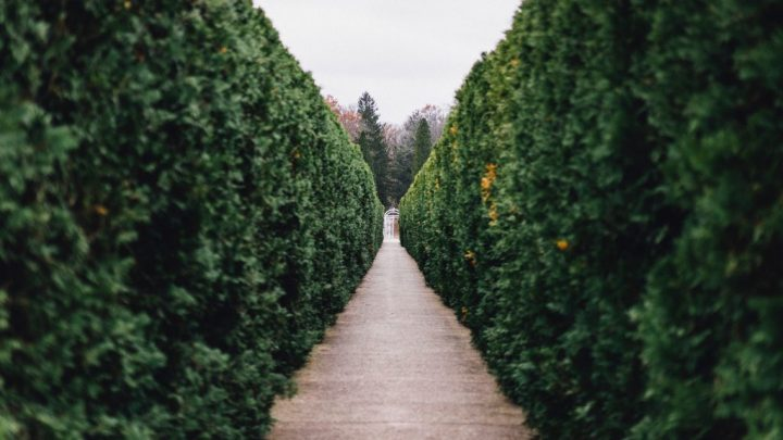 The Ins and Outs of Topiary Hierarchy by Evan Cozad