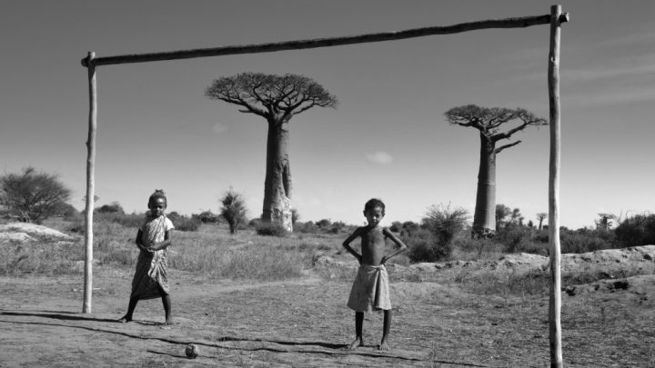 an essay on baobab trees by Lee Patterson