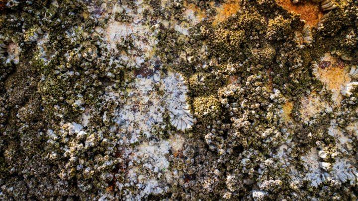 Love on the Rocks by Richard J. Fleming