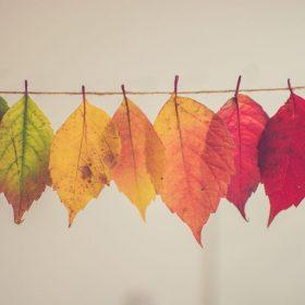 Regrettable Vesper while Waiting for Autumn by Samuel J Fox