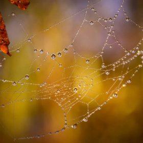 Love Poem: Inadequate Spider by Jessie Eikmann