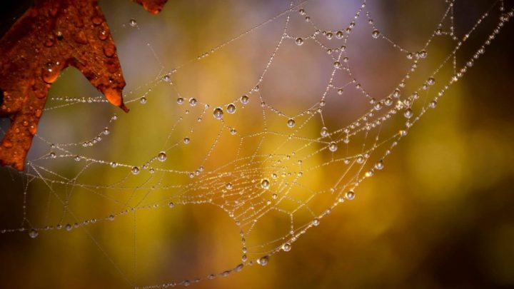 Love Poem: Inadequate Spider by Jessie Eikmann
