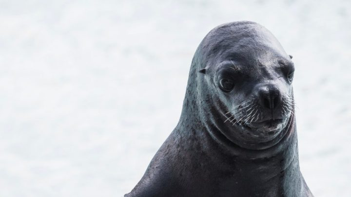 Come and see the seals in sunny West Kirby! by Guy Elston
