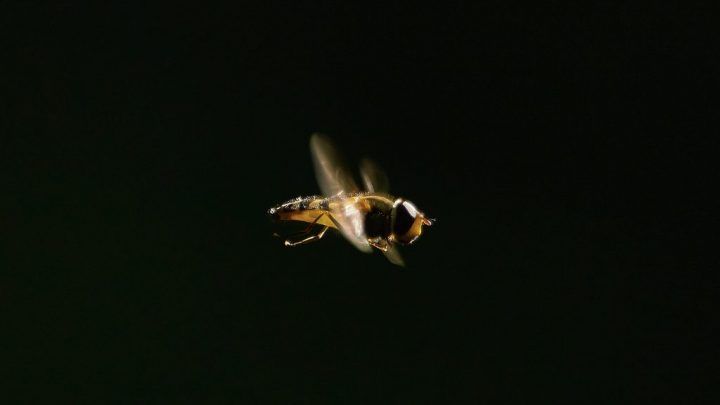 Buzz by Richard Baldasty