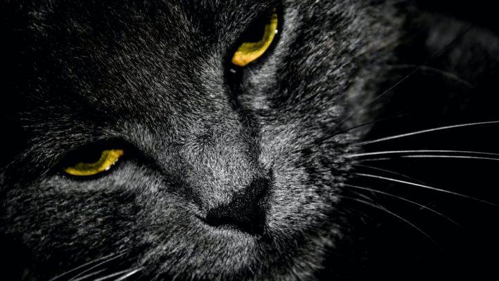Manx Cat by Dan MacIsaac