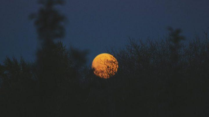 Moon by Cassandra Atherton