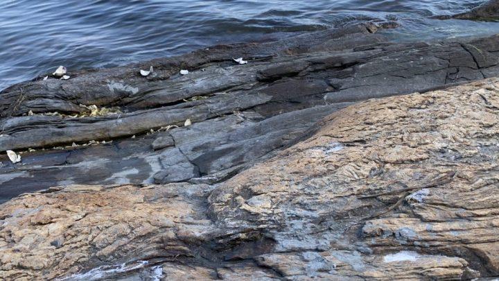 Maine Rocks by Karen Egee