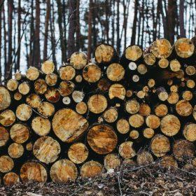 The Tale of Trees by Owen Bullock