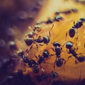About Ants by Jane Medved